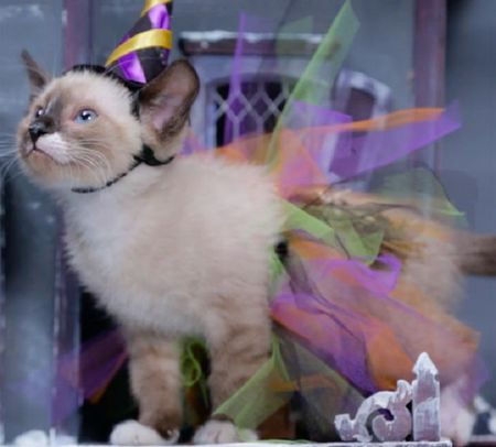 10 DIY Cat Costume Ideas for Halloween