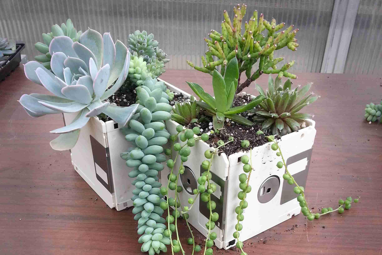 Computer disc succulent planter