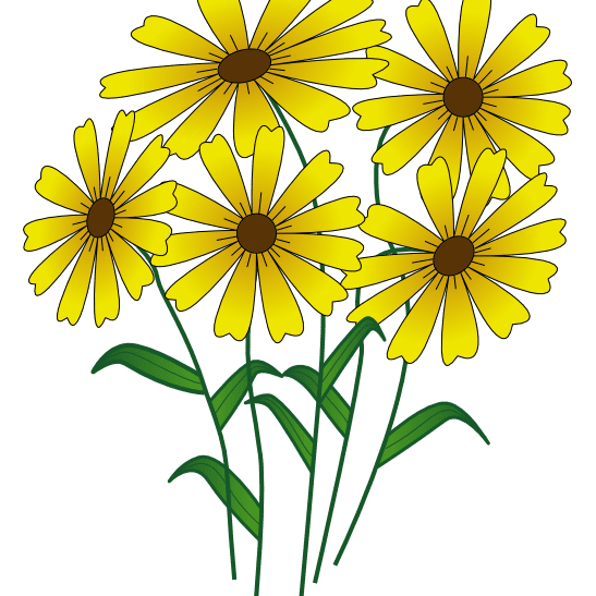 Flowers summer. Places to download