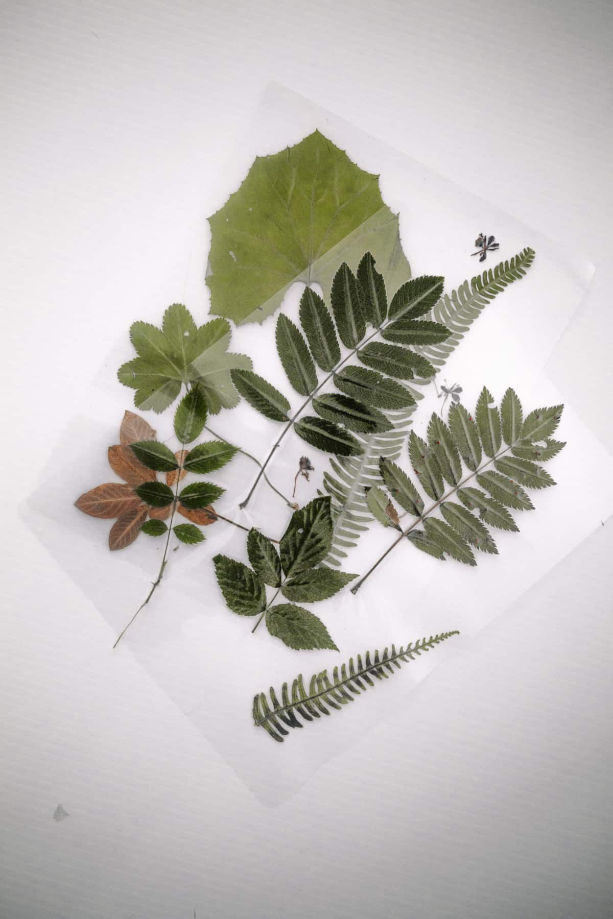 Leaf Bookmark