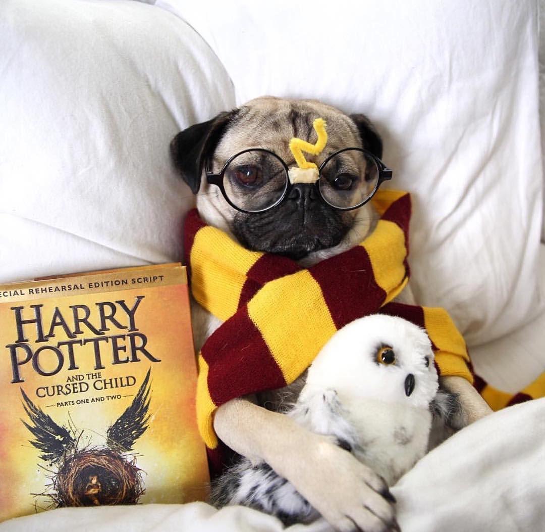 DIY dog costume harry potter