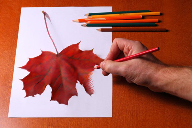 Drawing a Leaf With Colored Pencil Techniques