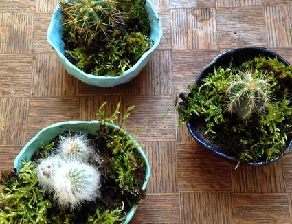 Innovative Ideas for Ceramic Plant Pots