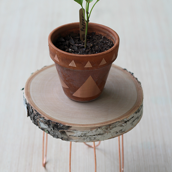Plant on wooden stool