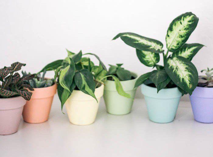 painted rainbow terra cotta pots
