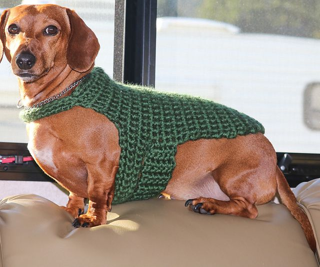 Dachshund in a green crochet sweater sitting on a leather cushion