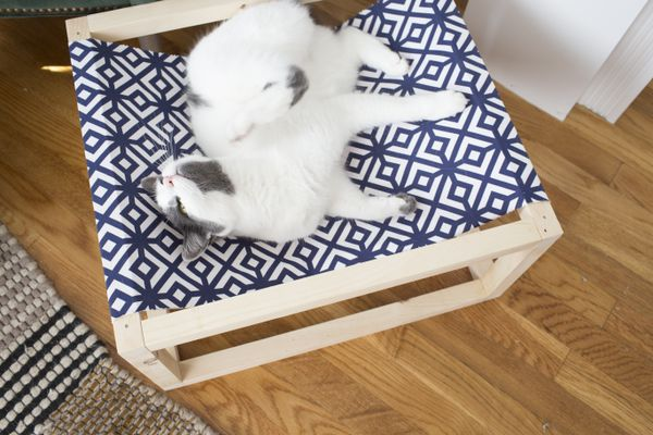 Cat in the cat hammock