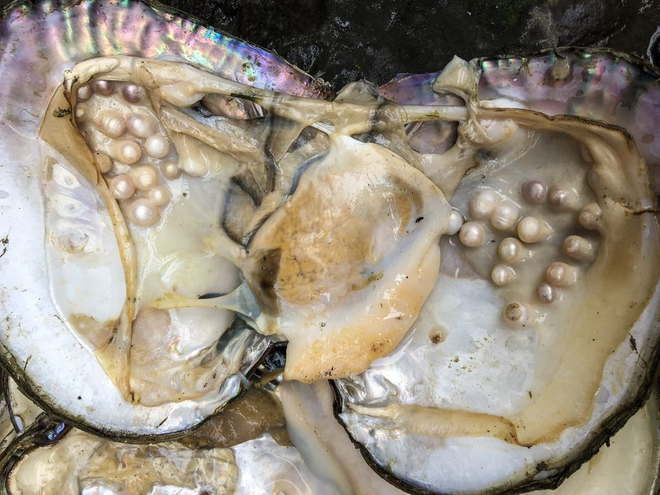 Mother of peal in an oyster shell