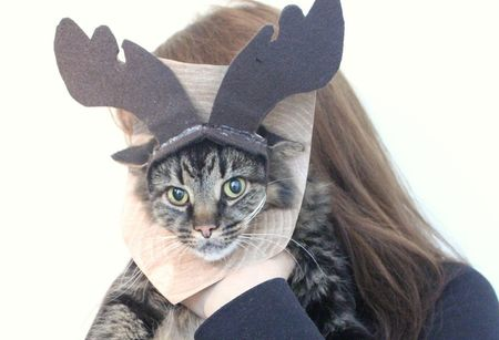 3e6b9045b A cat dressed as a mounted moose for Halloween.