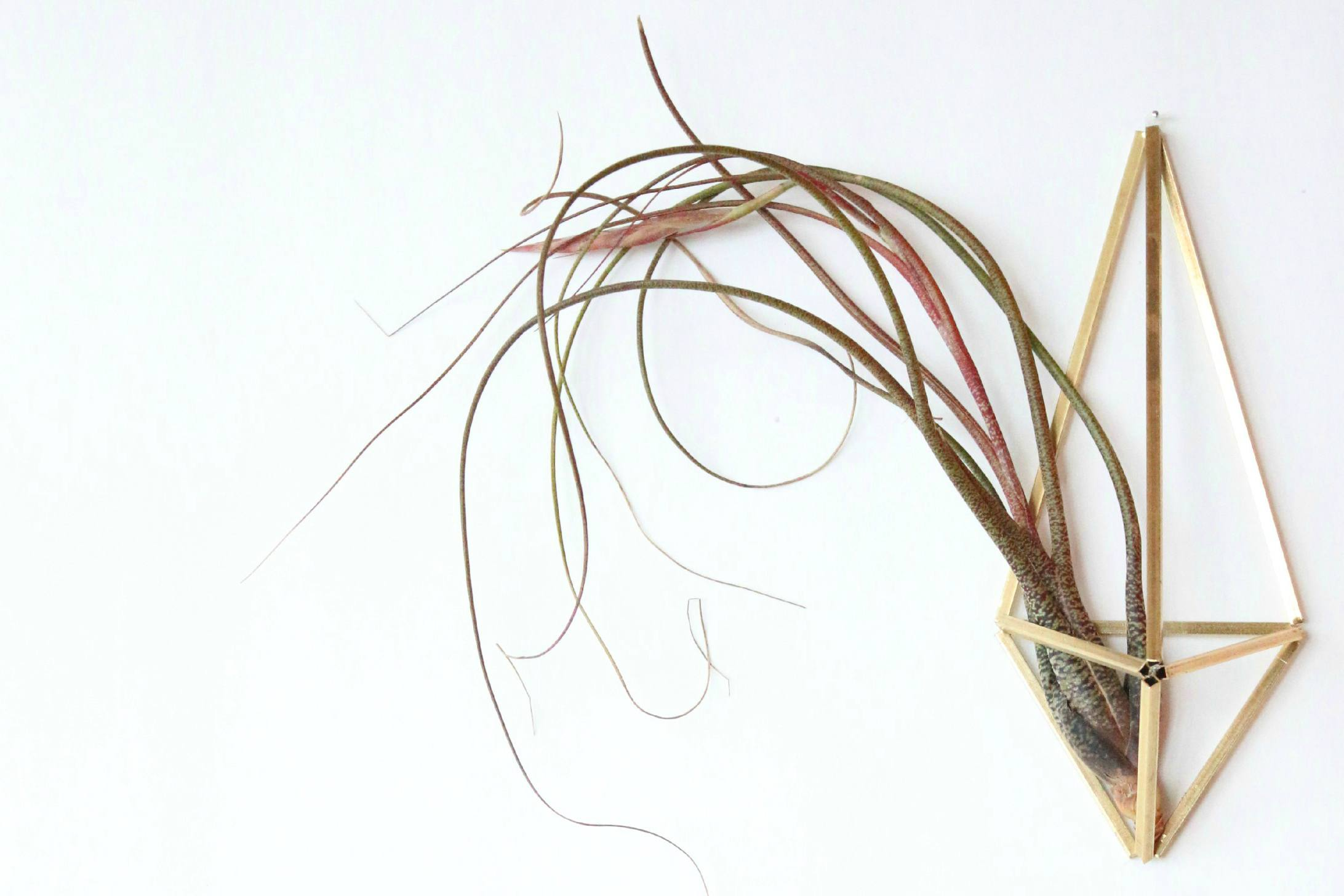 Brass air plant holder DIY