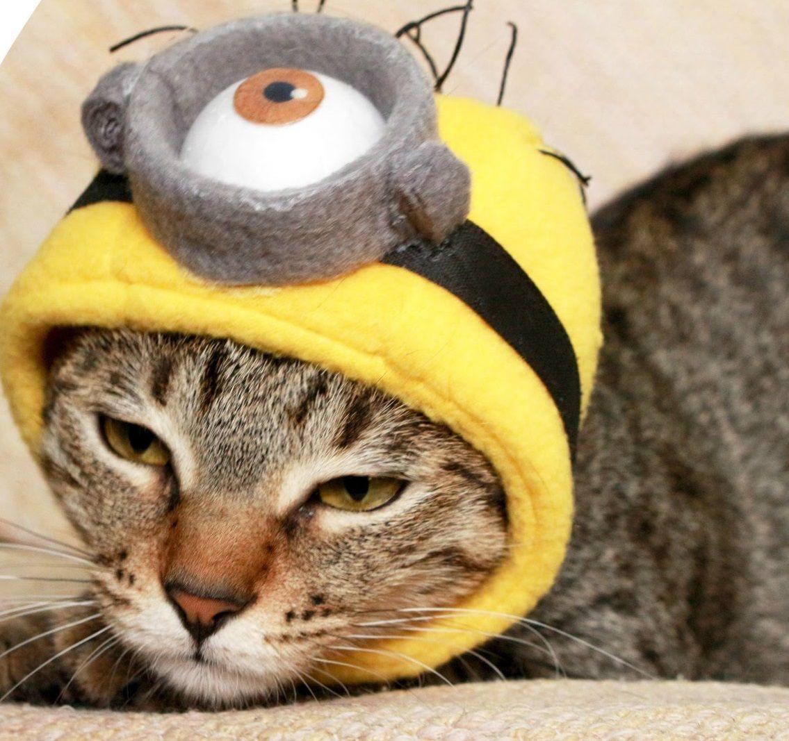 dd0e134bf 10 DIY Cat Costume Ideas for Halloween