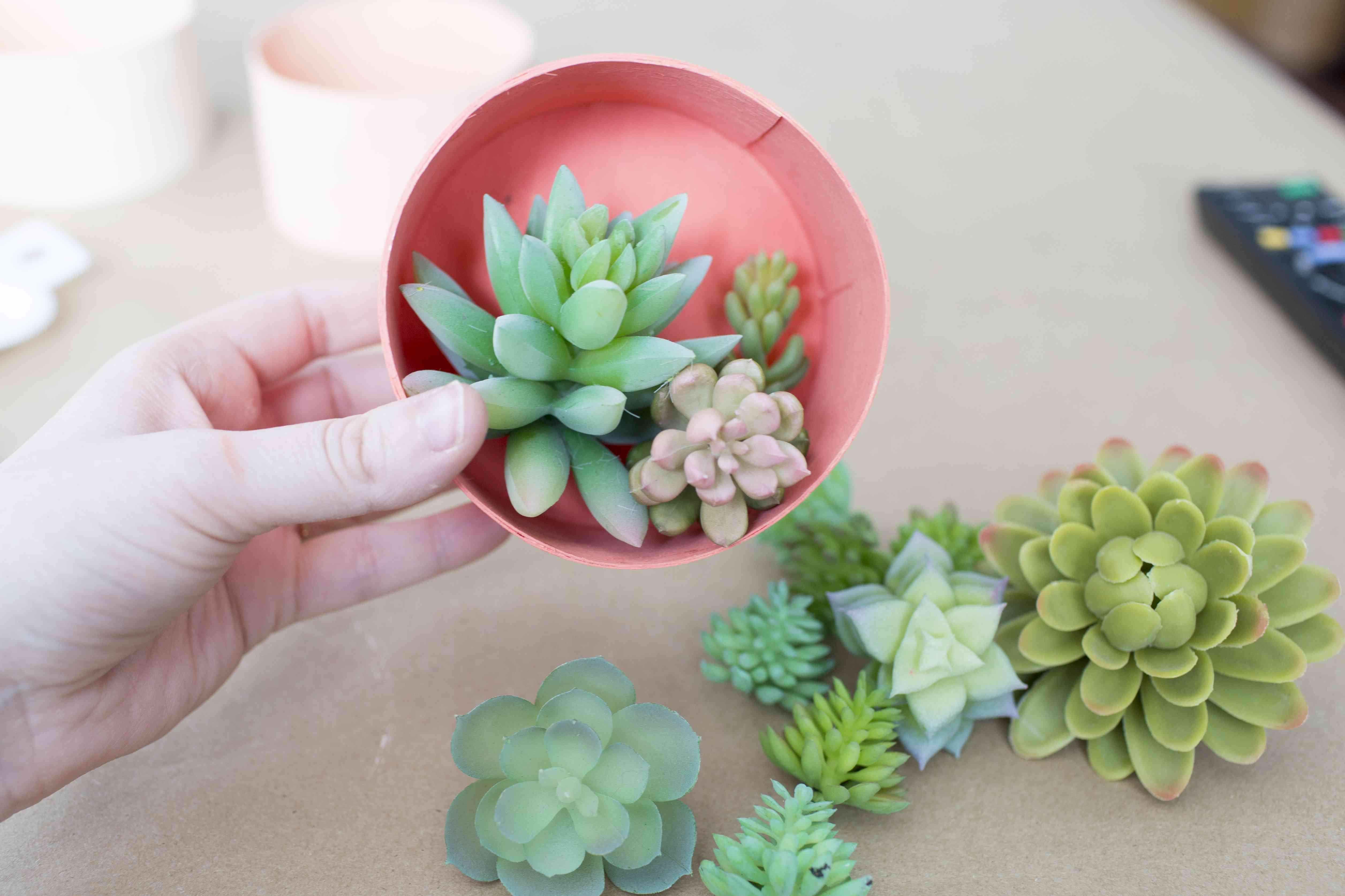 Plan out where your succulents should go within each container