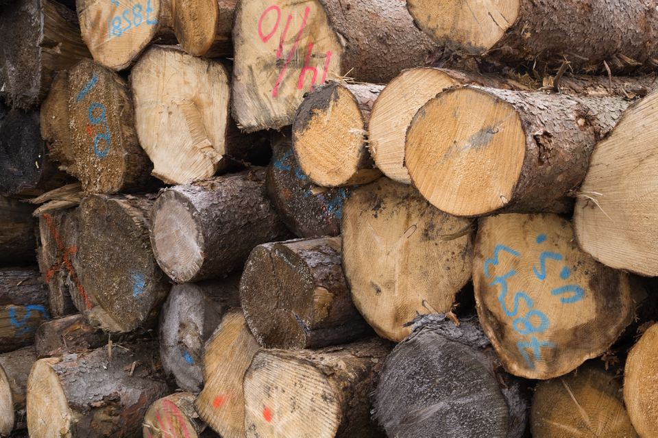 Close-up of marked and graded cut timber logs at a lumber mill, Quebec, Canada
