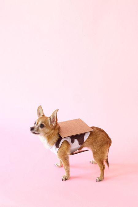 diy dog costume smore
