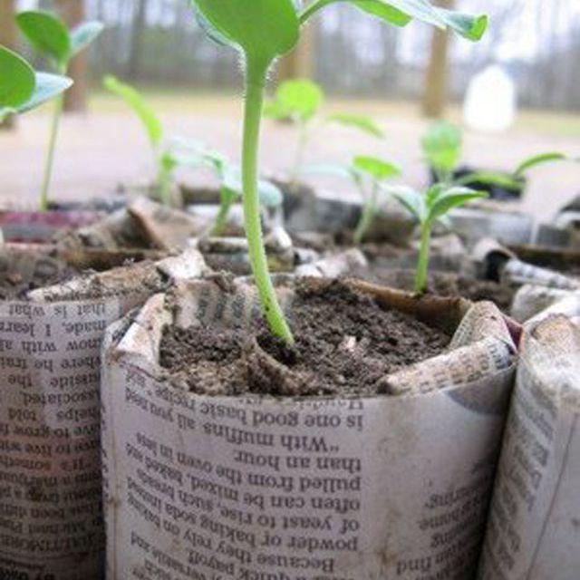 newspaper planter pots