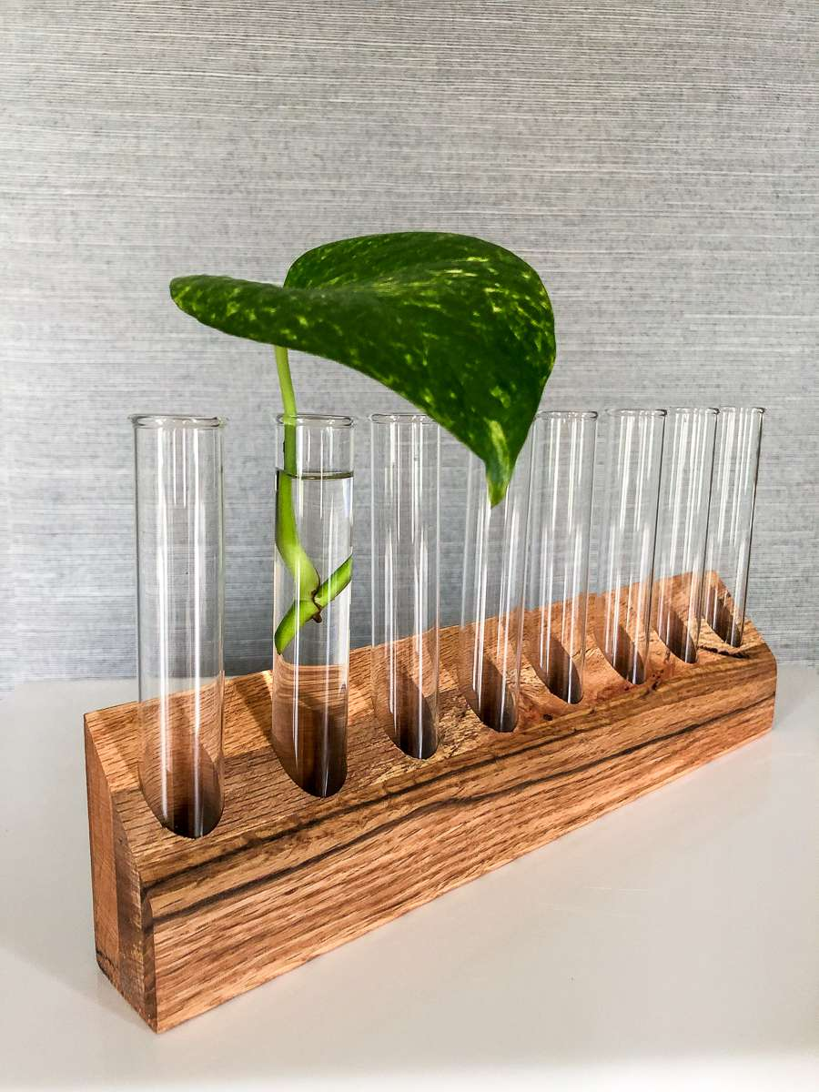 A leafy green plant in a test tube on a wooden holder.