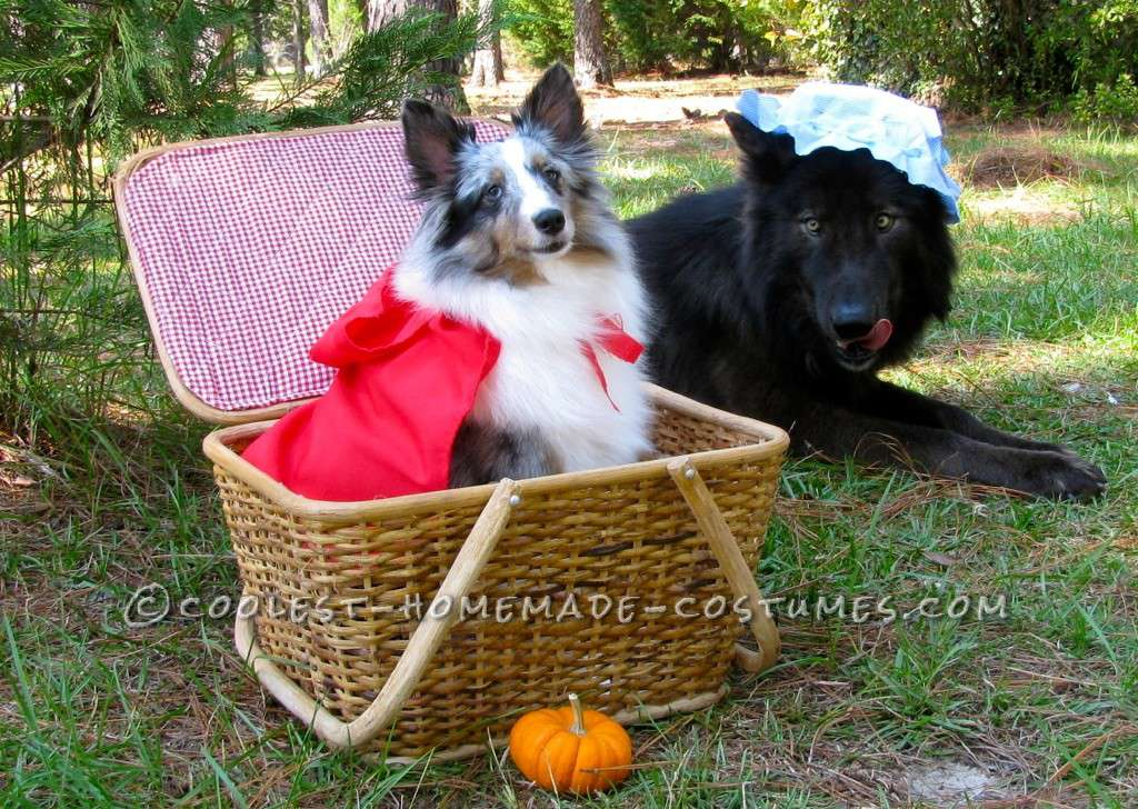 diy little red riding hood dog costumes