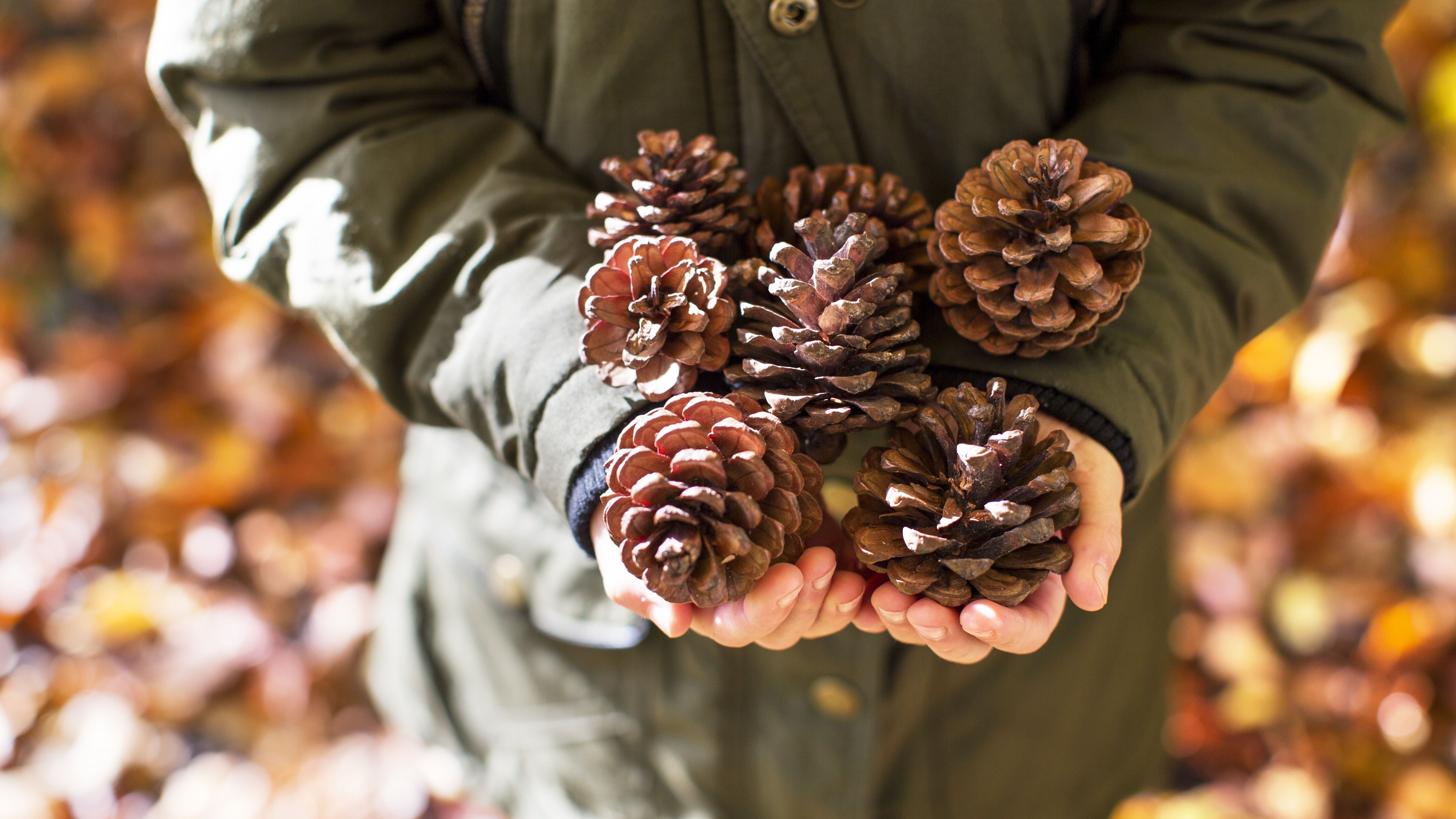 How To Make Pine Cone Fire Starters
