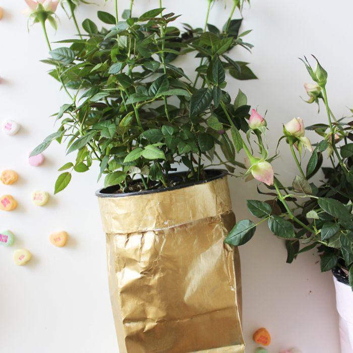 diy sugar bag planter