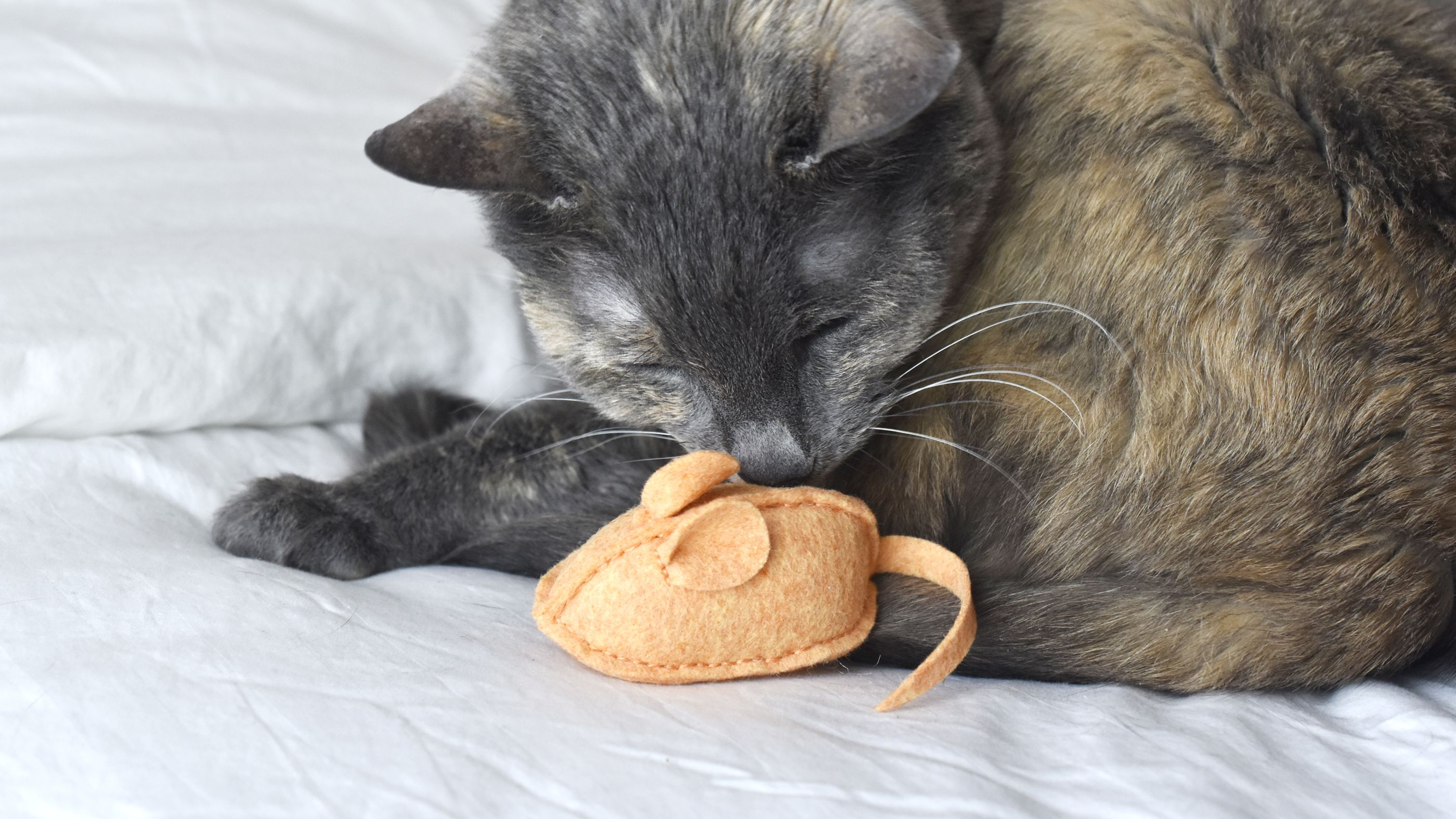 Catnip Cat Toy Sheep Wool-blend Felt