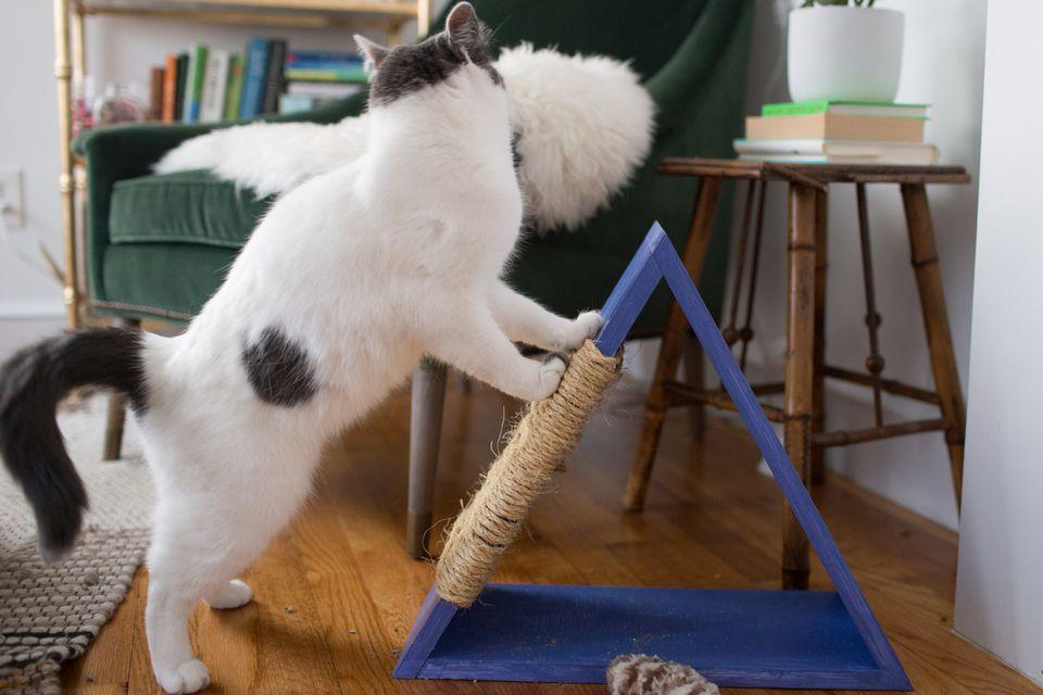 Cat scratching the cat tree