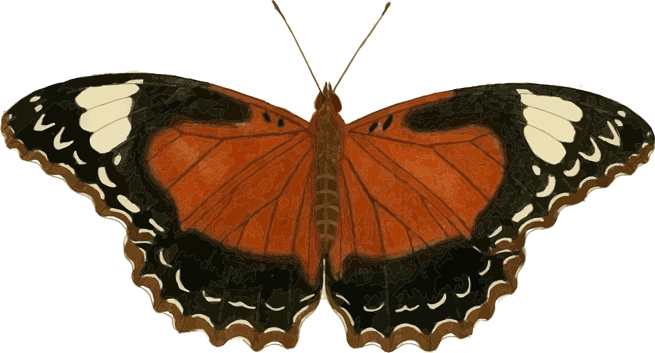 A brown, black, and cream colored butterfly.