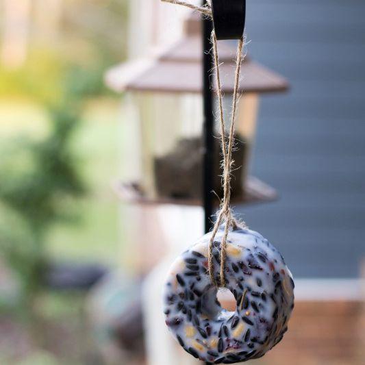 Suet bird feeders
