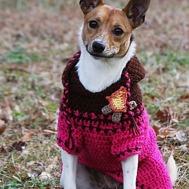 Dog in a pink and brown crochet sweater