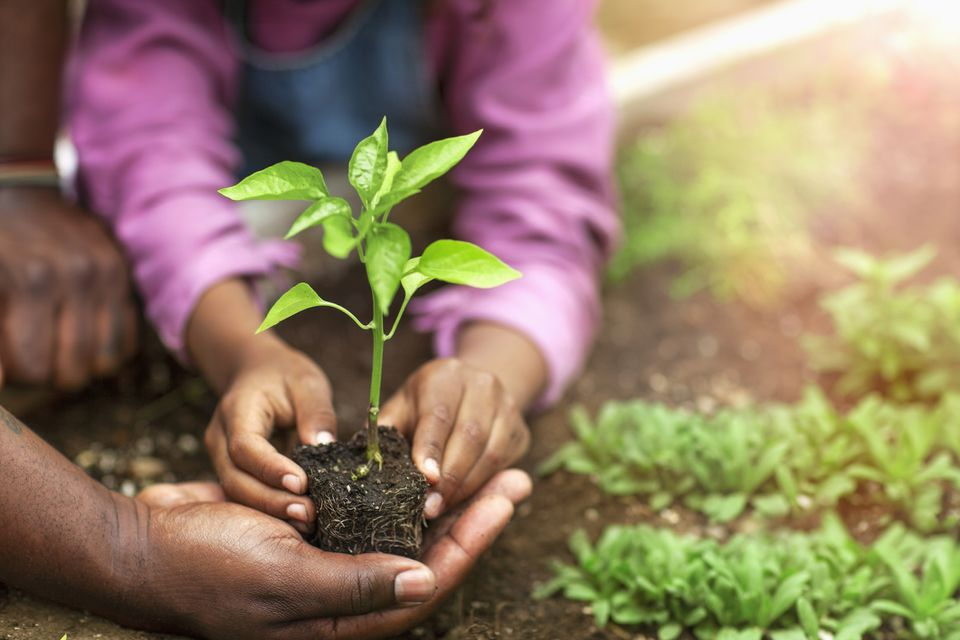 Father and daughter hands holding small seedling at plant nursery
