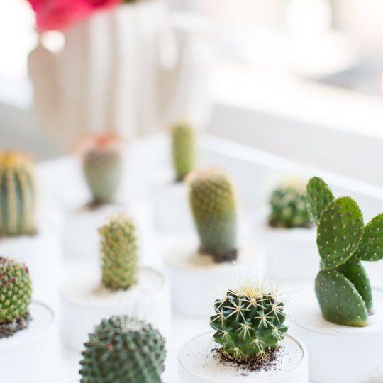 DIY Mini Cactus Party Favors