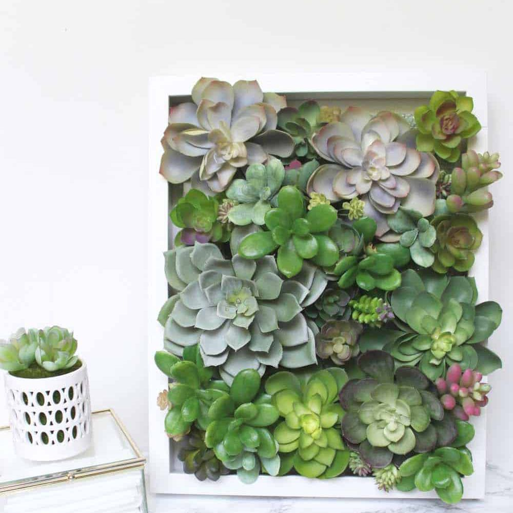 Succulent Shadow Box
