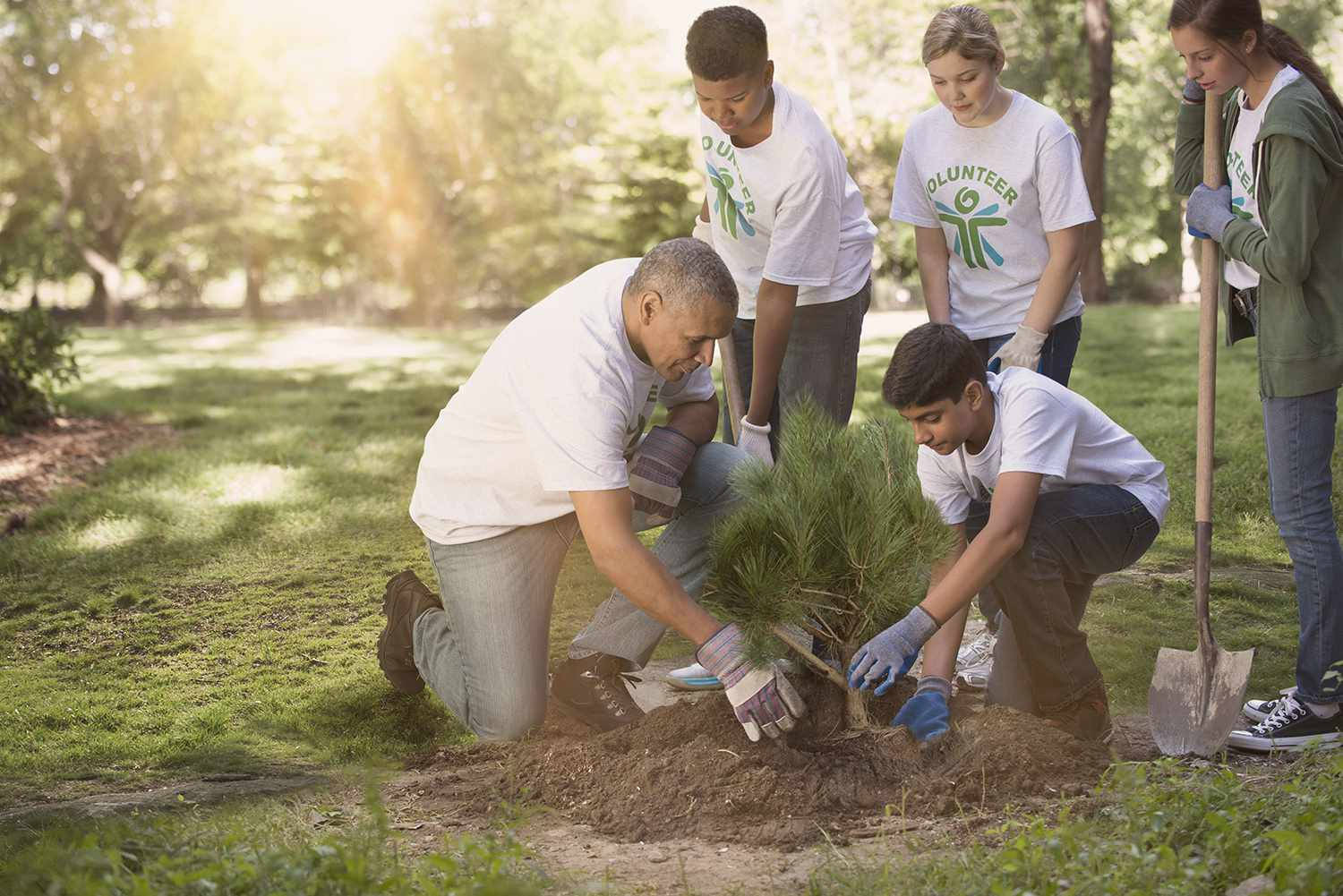 Volunteers planting a tree in a park