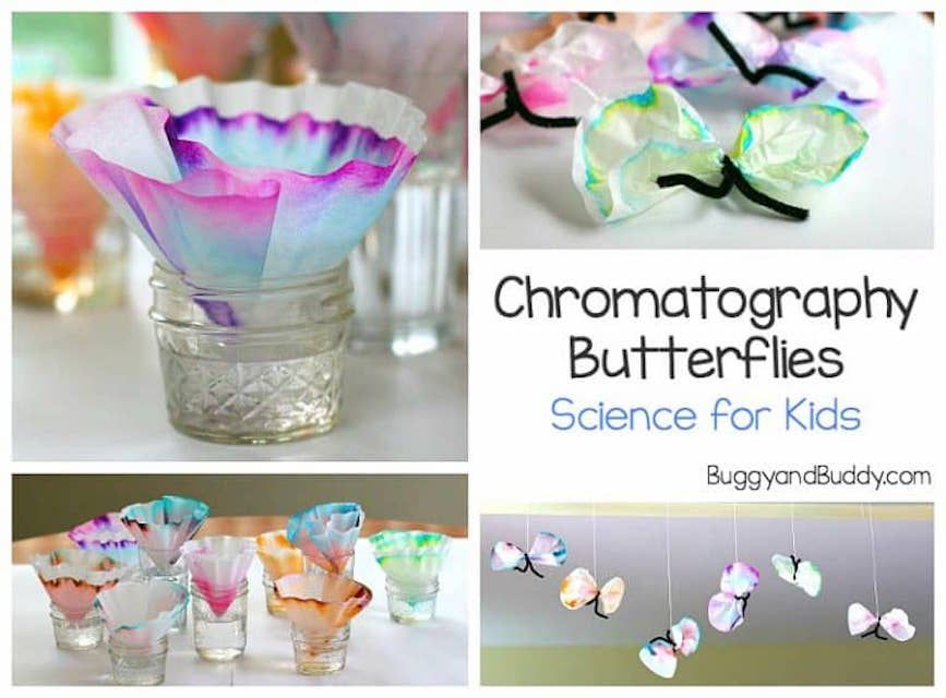 chromatography butterflies