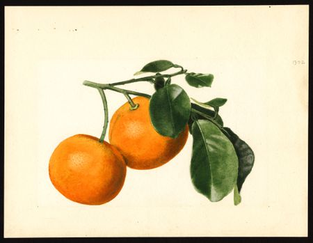 The USDA Has Some Special Collections That Lend Themselves Nicely To Free Art There Are Digital Printables Of Photographs Nursery And Seed Catalogs