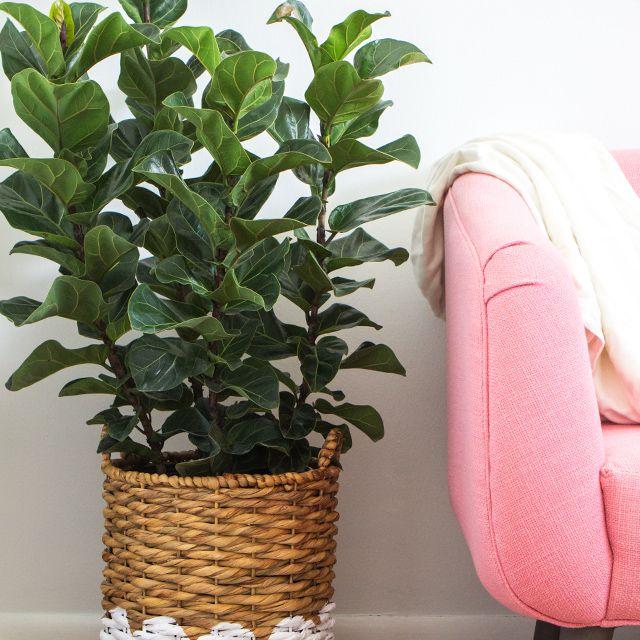 DIY Scallop Painted Basket Planter