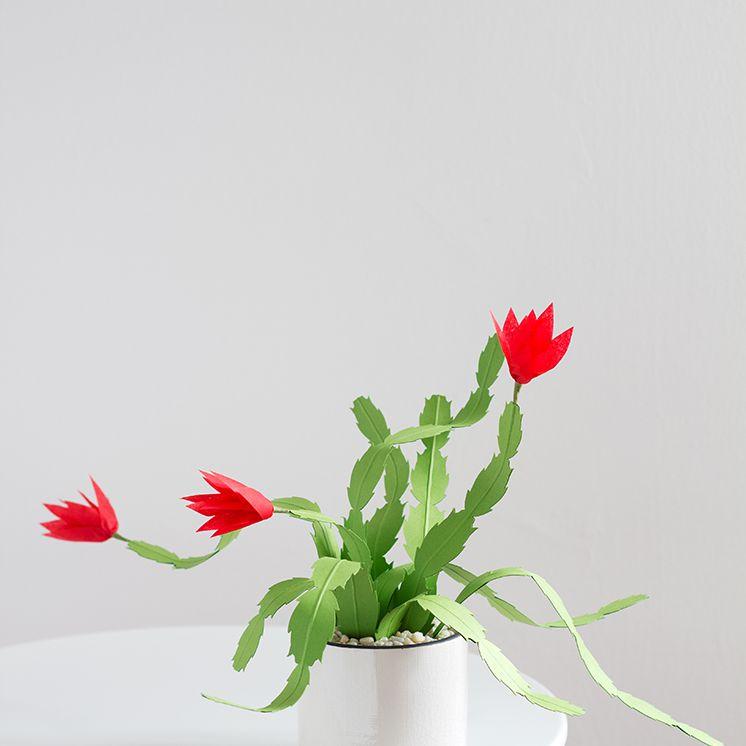 paper Christmas cactus flower