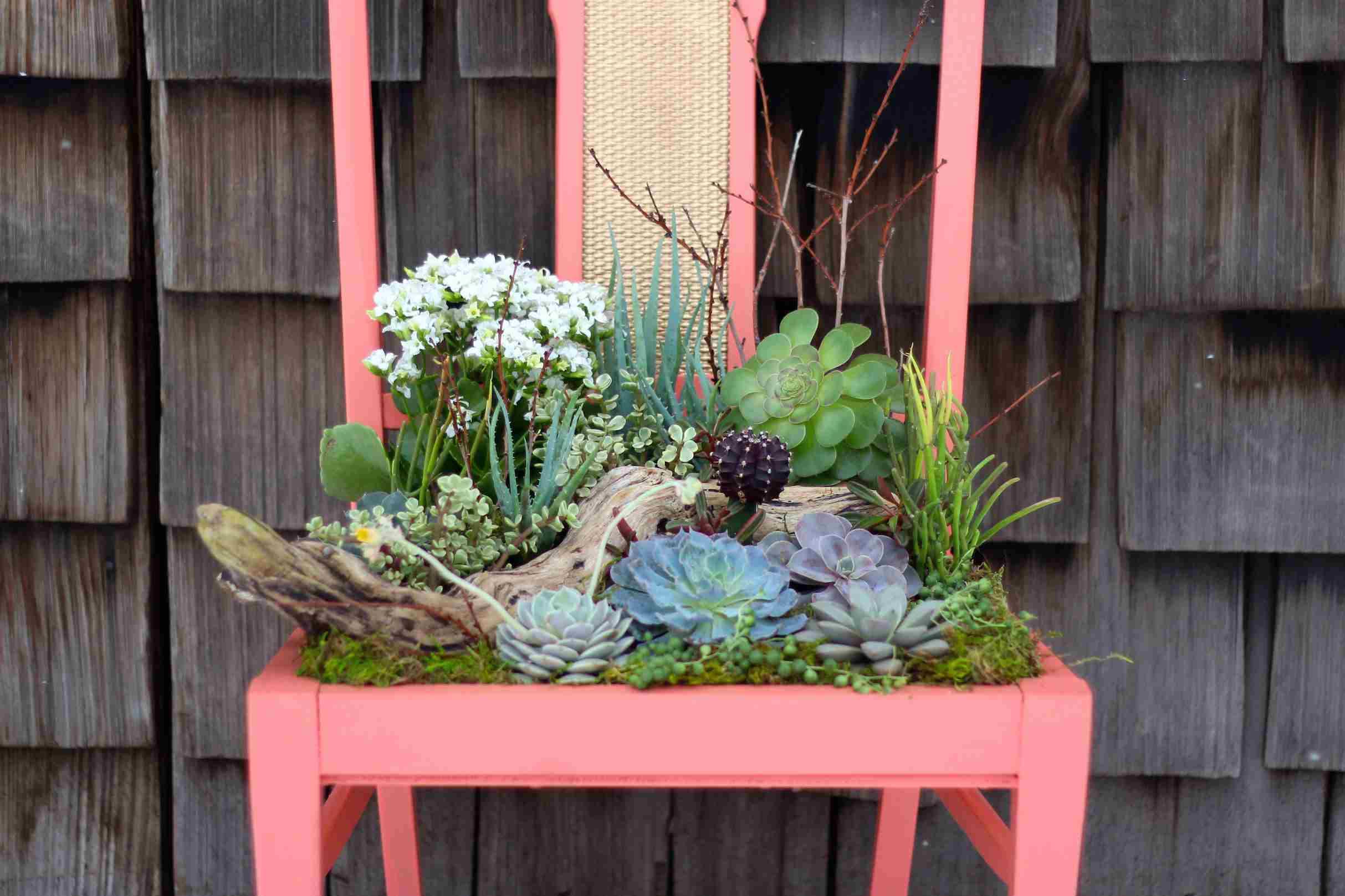 Chair succulent planter