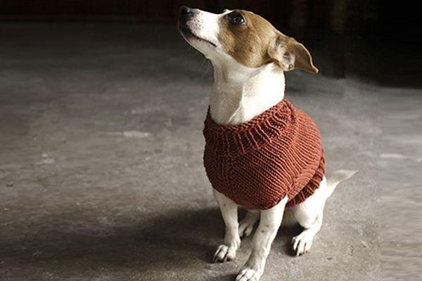Juno Dog Sweater Knitting Pattern