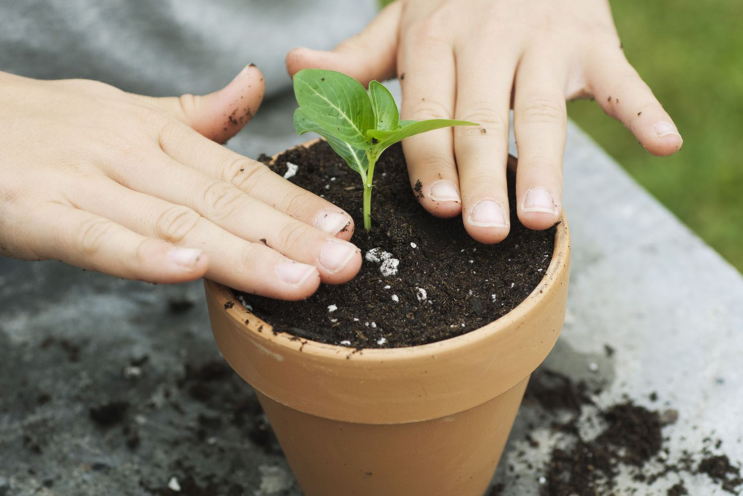 Girl Putting Plant in Pot