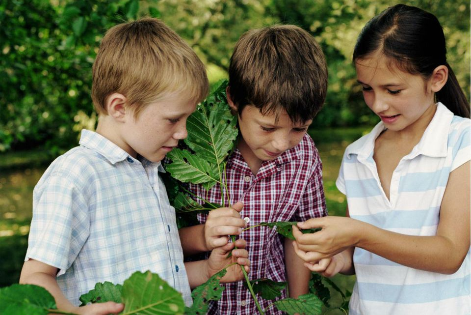 Three children (6-8) looking at leaves