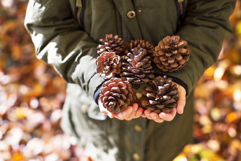 Woman holding pine cones
