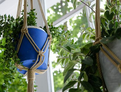 plants in macrame hanging plant holders