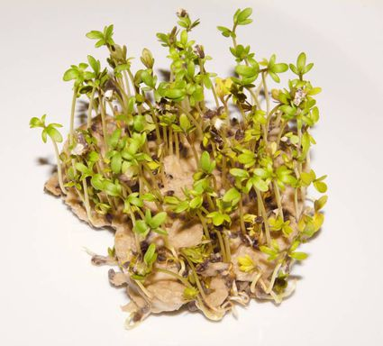 Plantable seed paper with seedlings