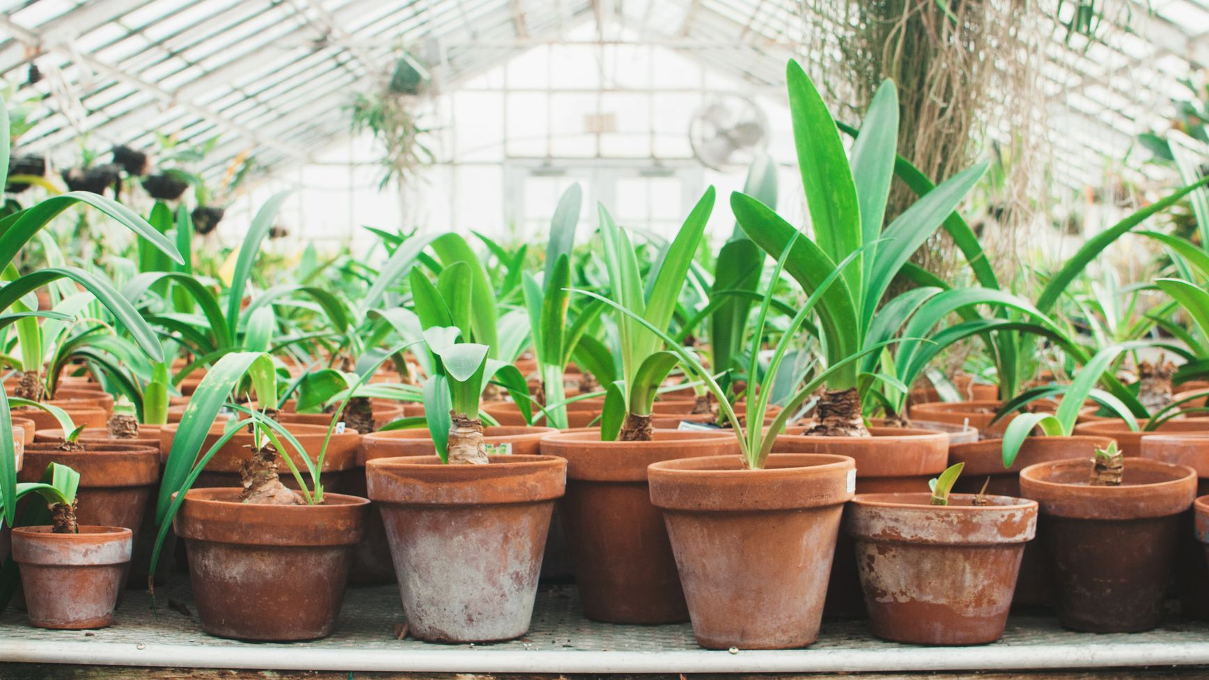 Use terra cotta pots or containers with drainage