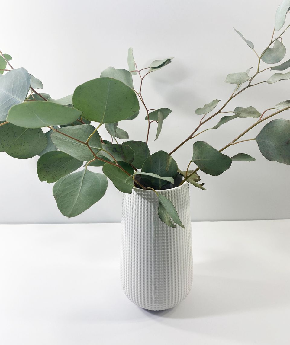 Eucalyptus in a white vase