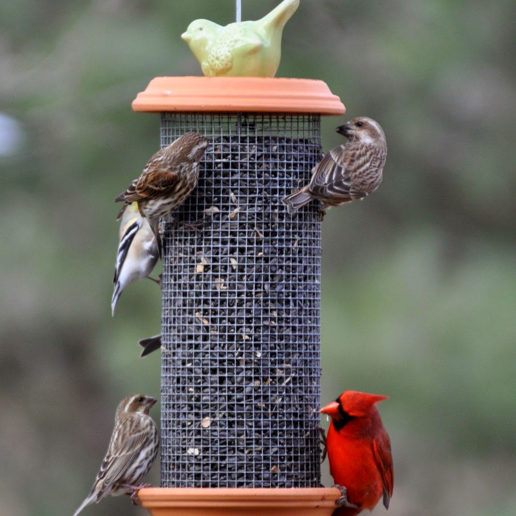 Mesh hardware bird feeder
