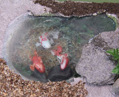 The edges of a dollhouse koi pool made from sheet styrene are covered to disguise the sheet edge.