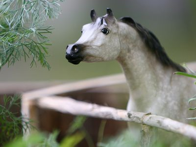 How to Start Sculpting Your Own Model Horses
