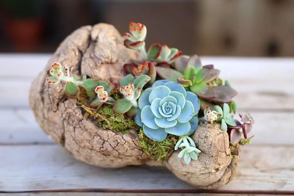 diy driftwood planter for succulents