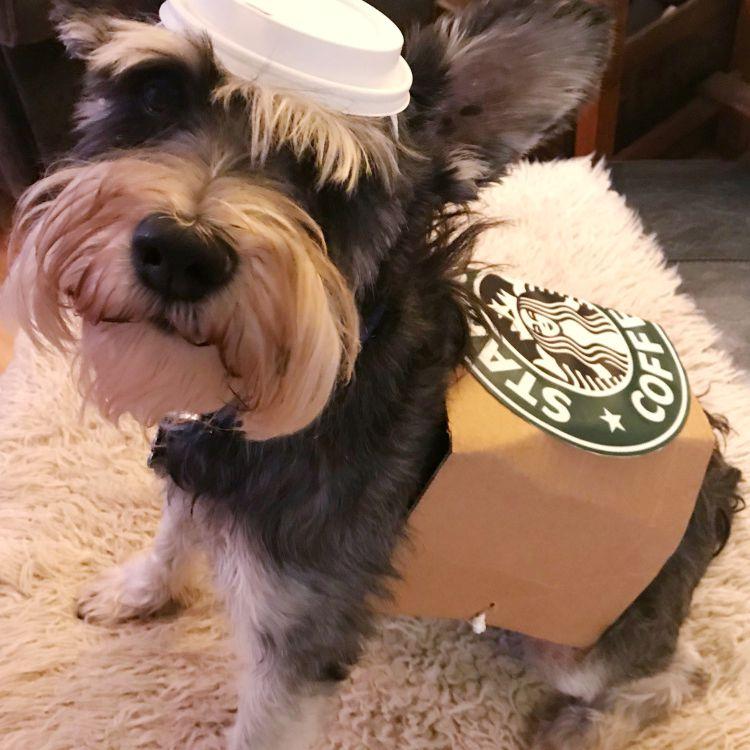 diy dog costume starbucks